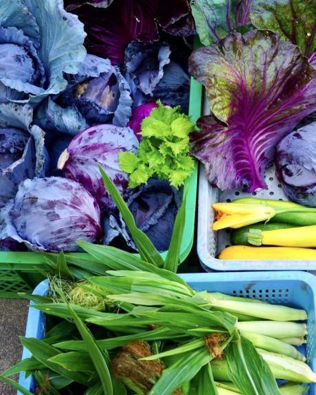 野菜・トウモロコシ・わかもろこし・コーン・食薬・薬膳・食養生